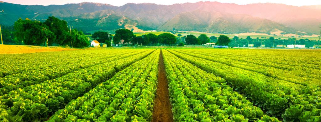 agronegócio, agoranomia, campo, produtividade, sistema de rastreabilidade