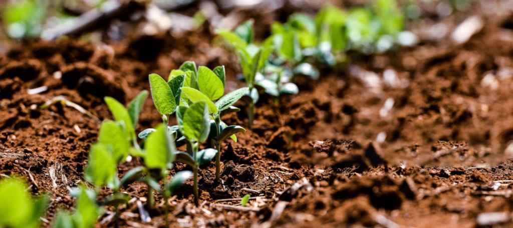 Agricultura e tecnologia