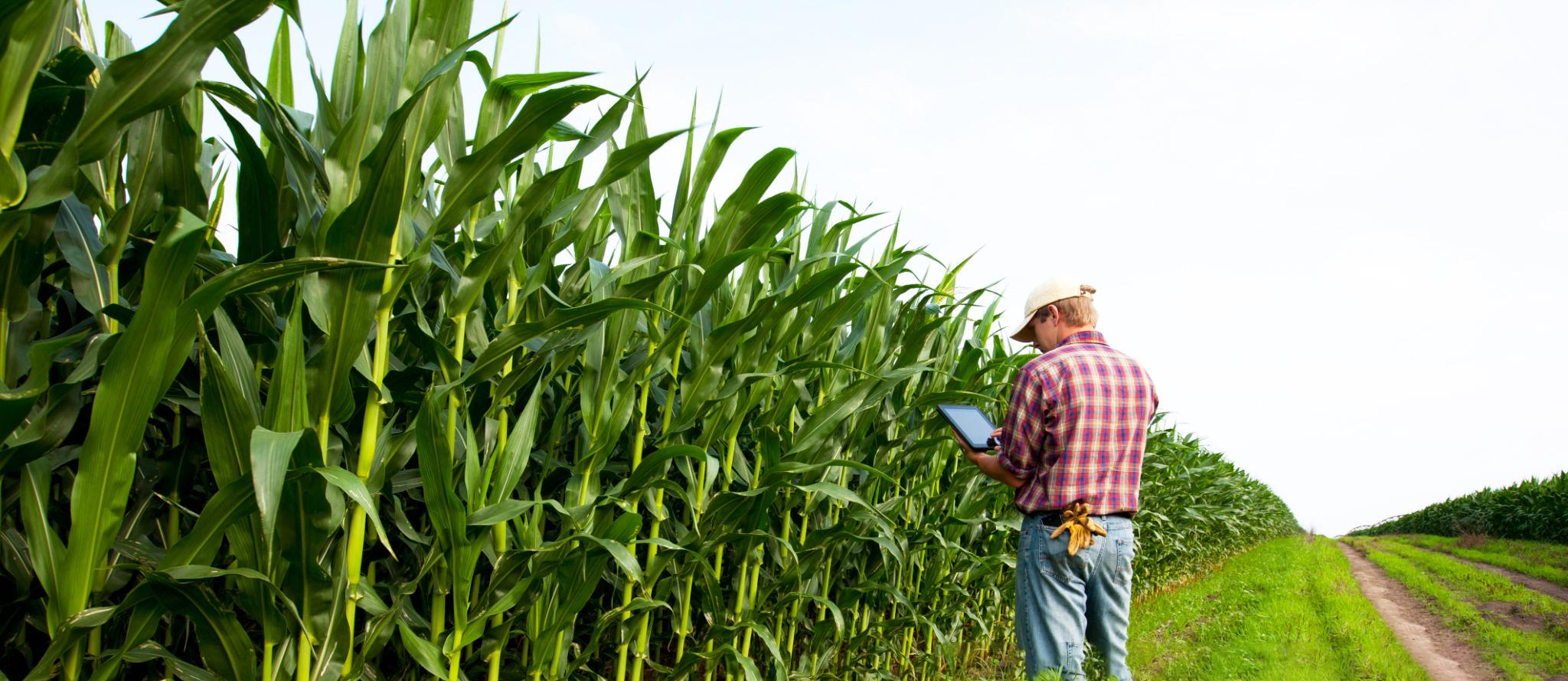 Fazenda Milho - Agro 4.0