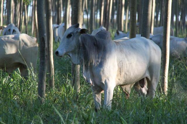 carne-bovina-carbono-neutro-embrapa